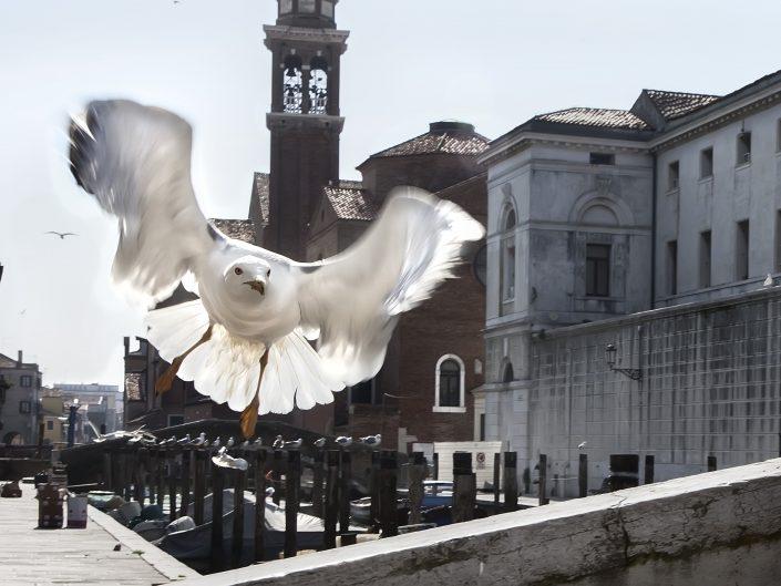 Un itinerario tra i canali di Chioggia sulle ali dei piccioni.