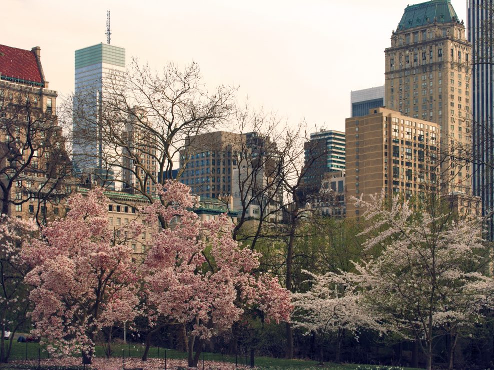 Primavera a Central Park New York